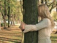 Целебная энергия деревьев. Дендротерапия