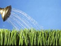 Как поливать цветы во время отпуска? На отдых с легким сердцем!