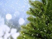 Как выбрать елку? А ведь скоро Новый год!