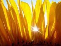 Недостаток витамина Д. Почему нам так необходим солнечный витамин?