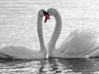 Уход за шеей — лебедь или пеликан?